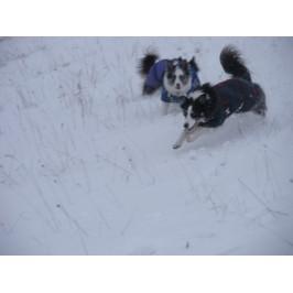 Foggy Mountain Nylon vinterfrakke Frenchie Lilla