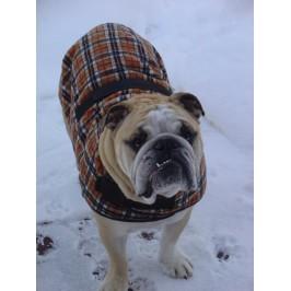 Foggy Mountain Snuggler Engelsk Bulldog Derby