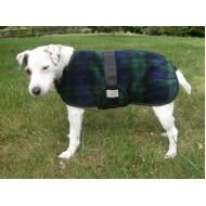 Foggy Mountain Snuggler Engelsk Bulldog Blackwatch
