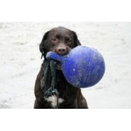 Jolly Pets Tug-n-Toss bold