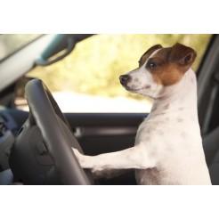 På tur - og træning - med hunden
