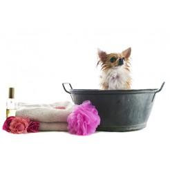 Shampoo, balsam og filterspray